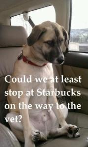 coffeedog