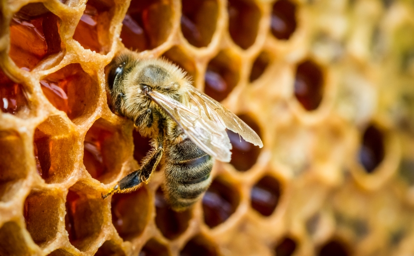 Defending the City: Harnessing the Ancient Wisdom of Bees for Whole Body Health